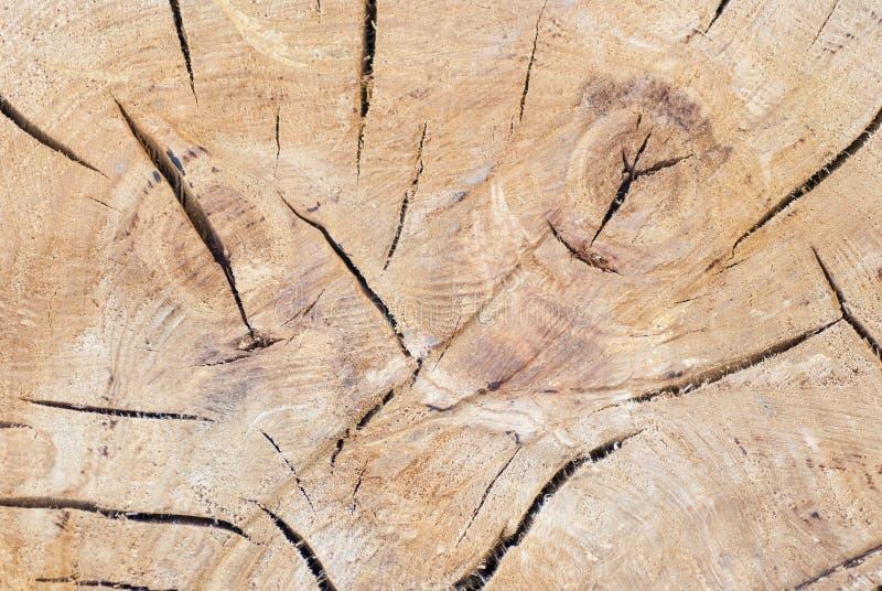 De boomstamtextuur van de boom royalty-vrije stock afbeelding