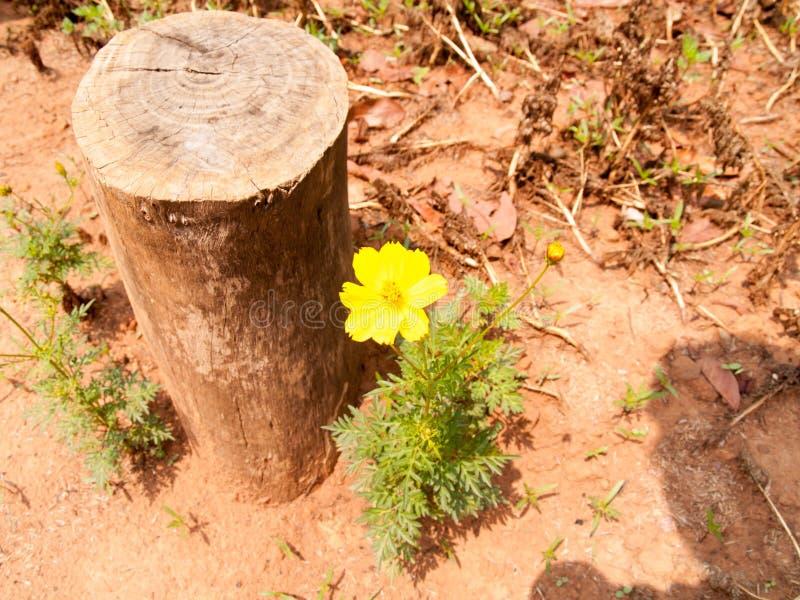De boomstomp en de gele bloem op grond bij dag royalty-vrije stock foto