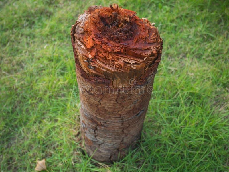 De boomstomp isoleert met groene grasachtergrond stock afbeeldingen