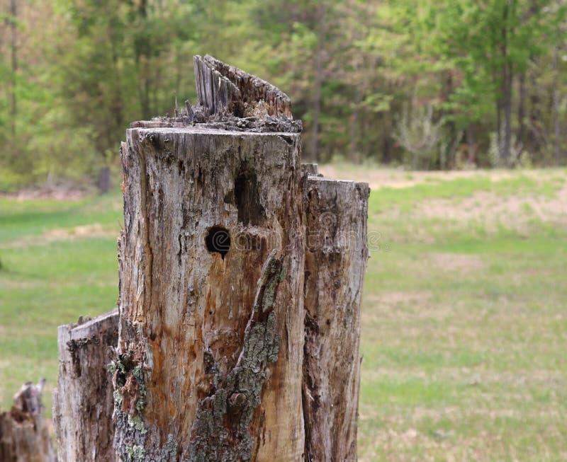 De boomstomp, rotte, Spechtgat, buiten royalty-vrije stock afbeelding