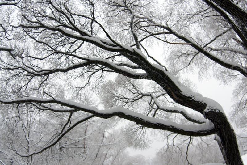 De boomtak van de winter royalty-vrije stock fotografie