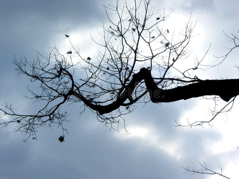 De boomtak van de winter royalty-vrije stock afbeeldingen