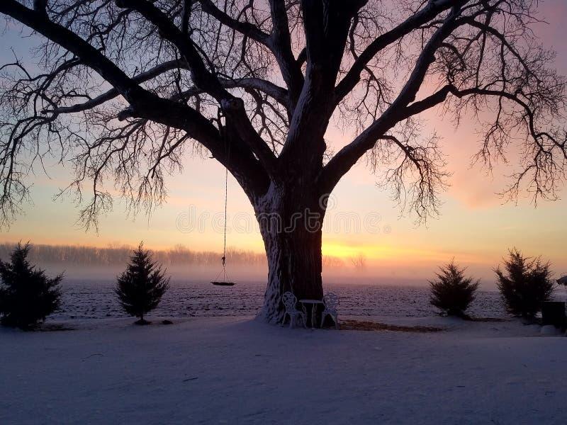 De de boomwinter van de zonsopgangmist stock fotografie