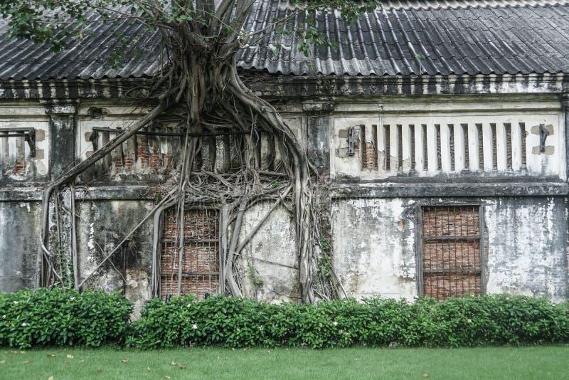 De boomwortel groeit op oud huis royalty-vrije stock afbeeldingen