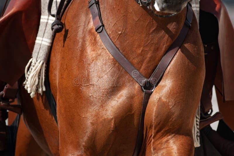 De borstclose-up van het zadelpaard stock afbeeldingen
