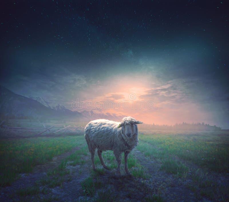 De borttappade fåren arkivfoton