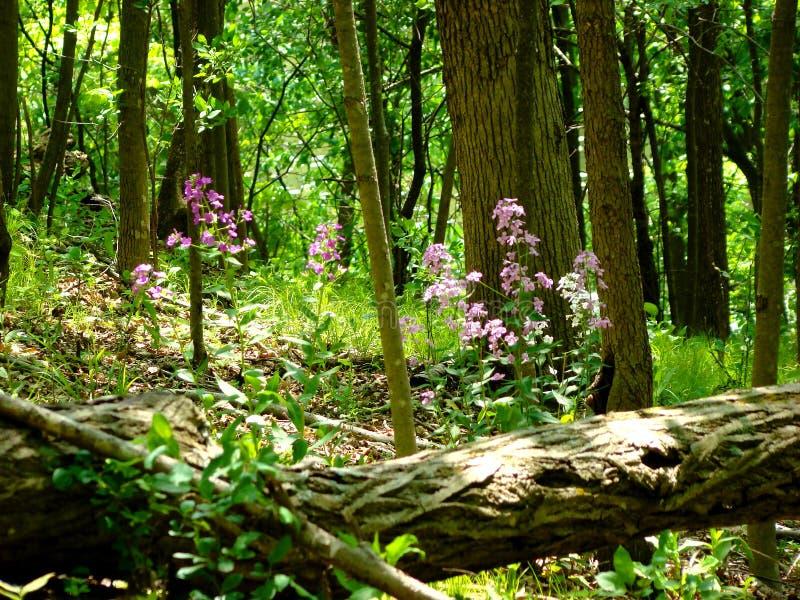 De bos daling van de vloerboom royalty-vrije stock afbeelding