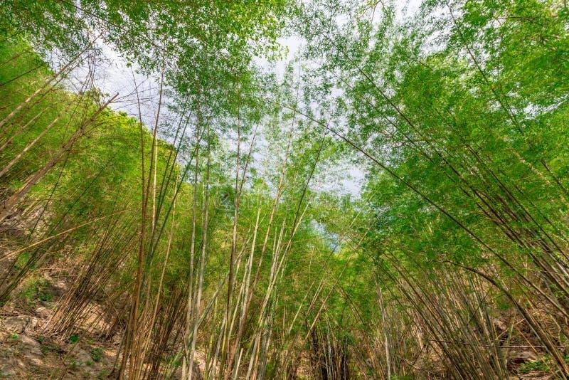 De bos en blauwe hemel van het bamboe royalty-vrije stock afbeeldingen