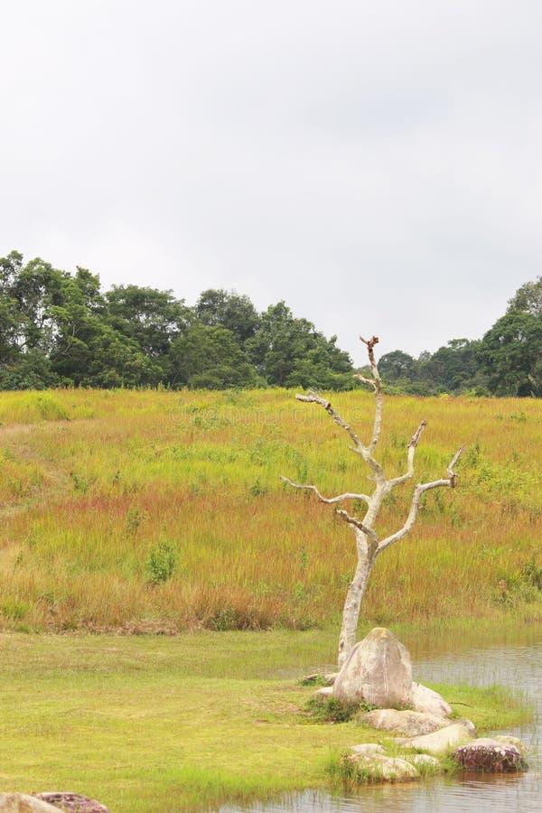 De bos en grasachtergrond in het nationale park van khoayai, Thailand stock fotografie