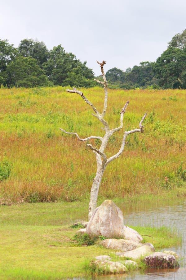 De bos en grasachtergrond in het nationale park van khoayai, Thailand stock foto's