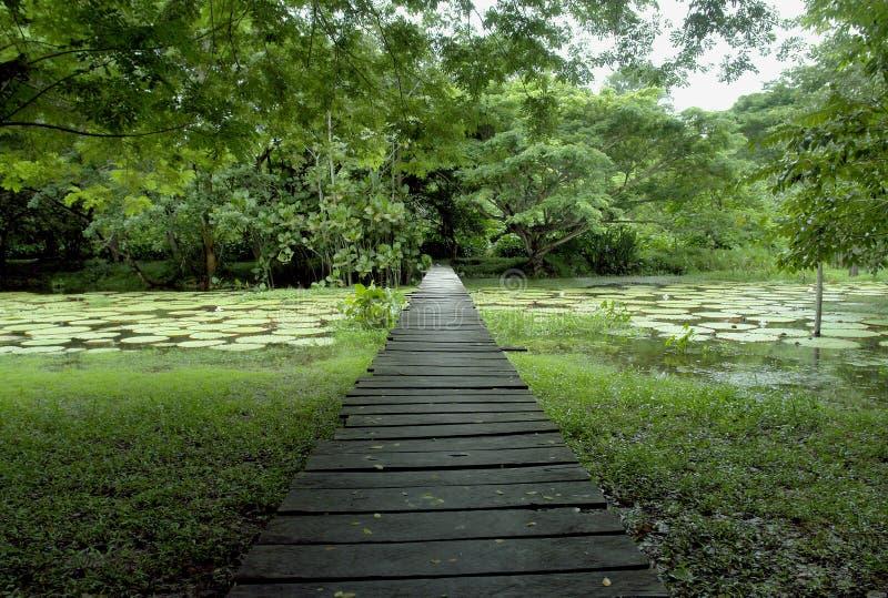 De bos houten brug van Amazonië stock afbeelding