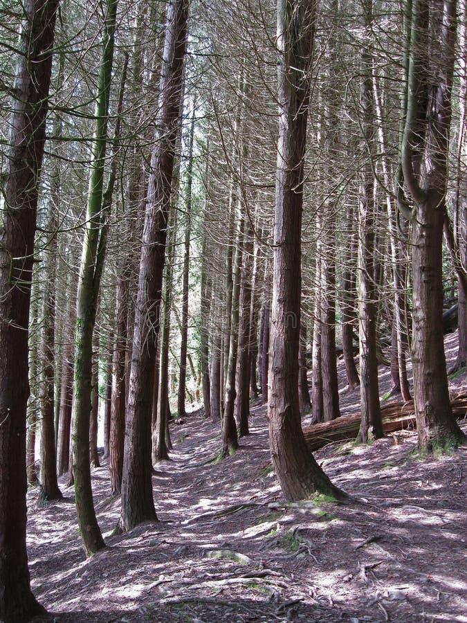 De bos- manier van Cornwall het UK royalty-vrije stock afbeeldingen