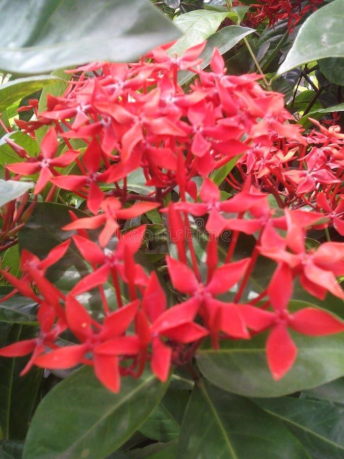 De bos van de bloem royalty-vrije stock afbeeldingen