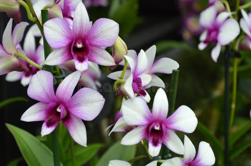De bos van delicated en eenvoudige bloemen royalty-vrije stock foto