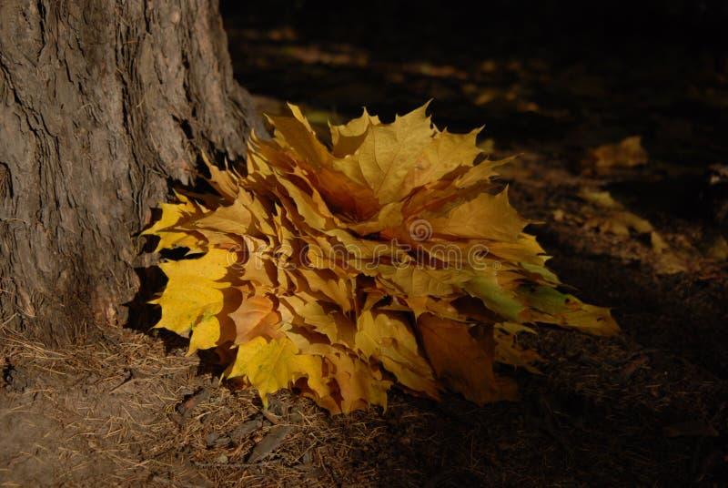 De bos van esdoornbladeren stock foto