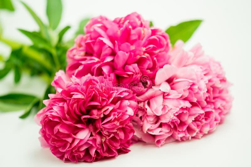 De bos van Helder Donker Roze bloost het Close-up van Pioenbloemen royalty-vrije stock afbeelding