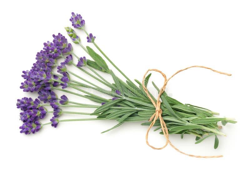 De bos van lavendelbloemen op witte achtergrond wordt ge?soleerd die royalty-vrije stock foto's