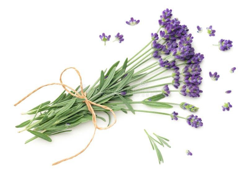 De bos van lavendelbloemen op witte achtergrond wordt ge?soleerd die royalty-vrije stock afbeeldingen