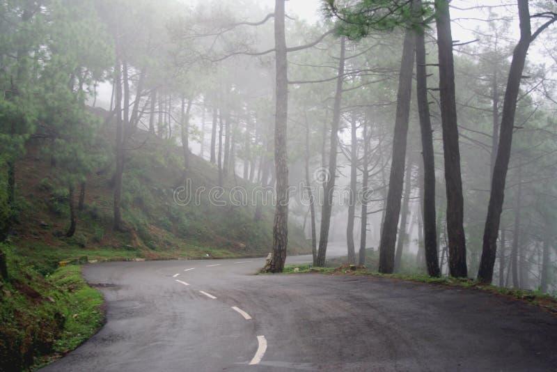 De bos Windende wegen van de pijnboom van Himalayagebergte, India royalty-vrije stock fotografie