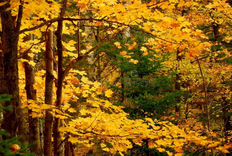 De bosachtergrond van de daling royalty-vrije stock afbeeldingen
