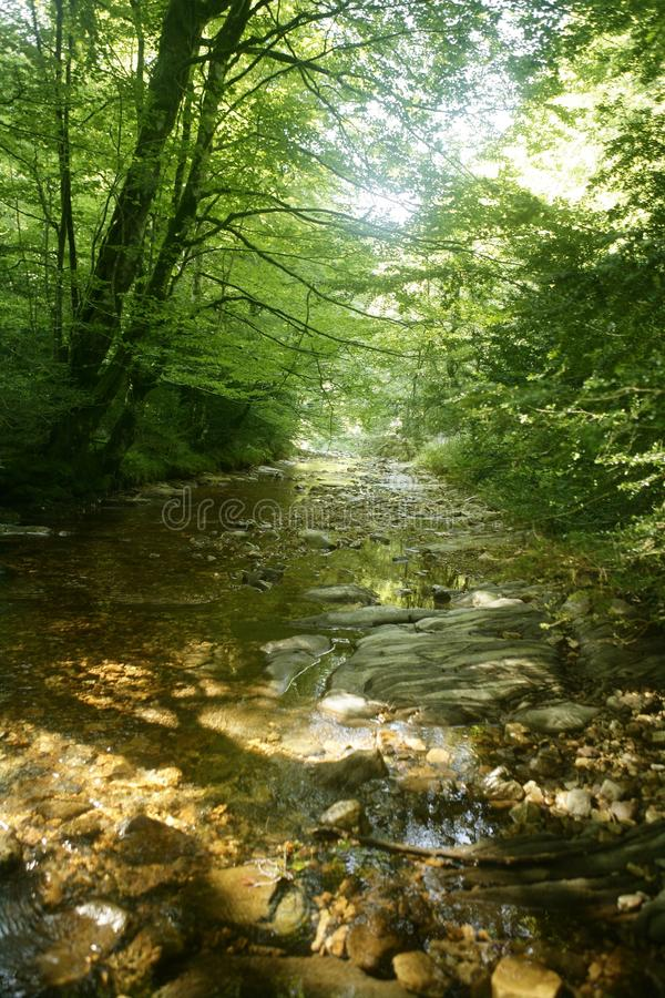 De bosbomen van de beuk met rivier onder stroom stock afbeelding