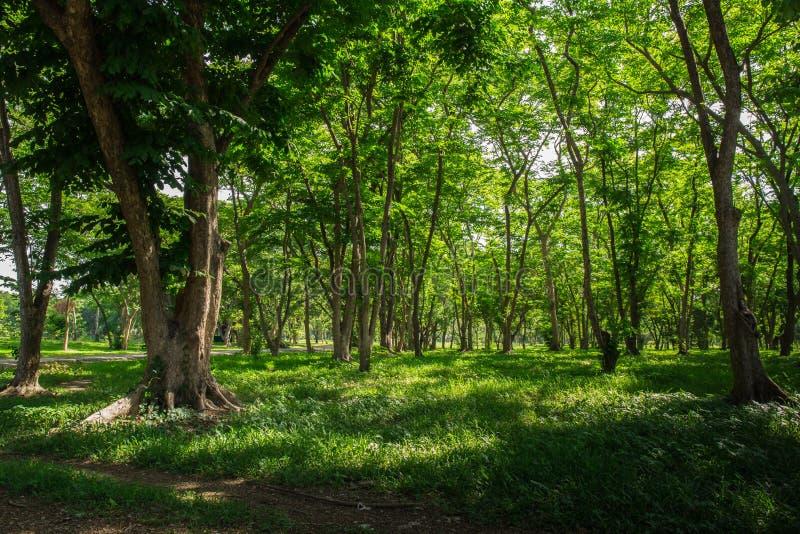 De bosbomen van de herfst achtergronden van het aard de groene houten zonlicht aard groen hout royalty-vrije stock foto's