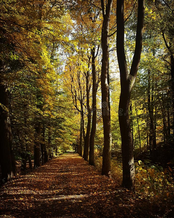 De bosbomen van de herfst achtergronden van het aard de groene houten zonlicht Groene houten het zonlichtachtergronden van de aar royalty-vrije stock foto's