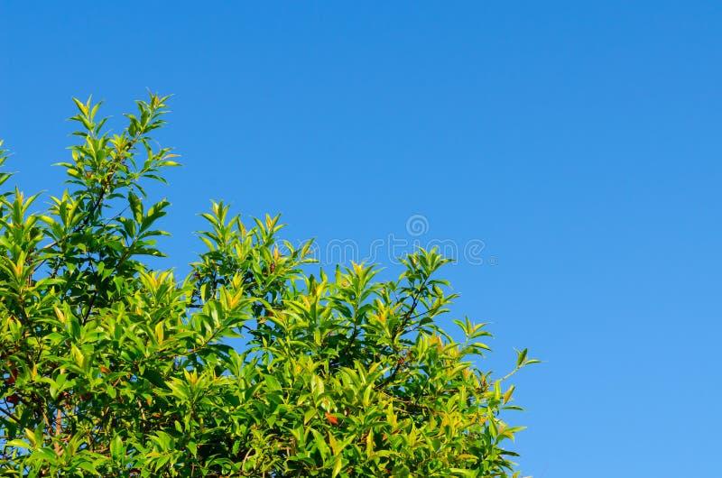 De bosboom en de blauwe hemel royalty-vrije stock fotografie