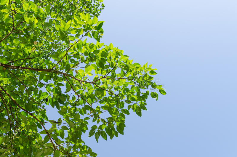 De bosboom en de blauwe hemel stock foto