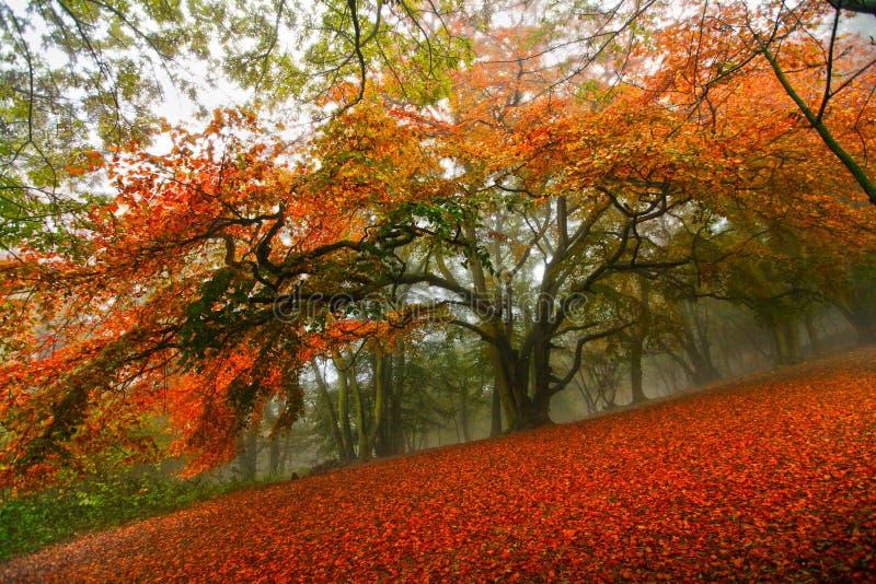 De bosboom van de herfst fairytale stock foto's
