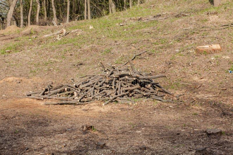 De bosbouwbenutting van de pijnboomboom in een zonnige dag De stompen en de logboeken tonen aan dat overexploitation tot ontbossi royalty-vrije stock foto