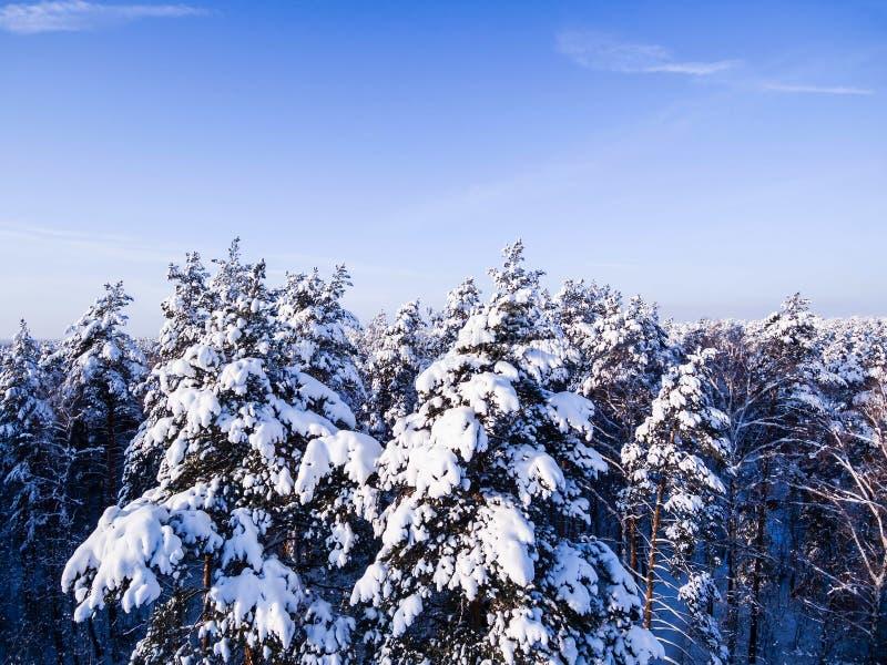 De bosbovenkanten van de satellietbeeldwinter van sneeuwboomtak en blauwe hemel De Mening van het Oog van vogels royalty-vrije stock foto