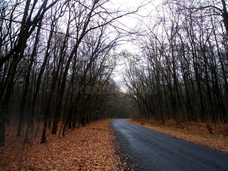 De bosherfst de weg en rond de kromming stock foto