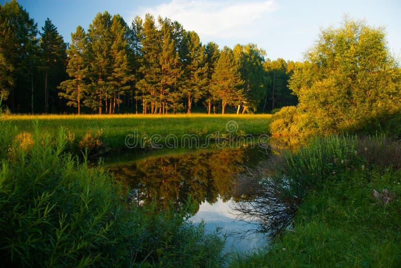 De bosmening van het rivierlandschap royalty-vrije stock fotografie