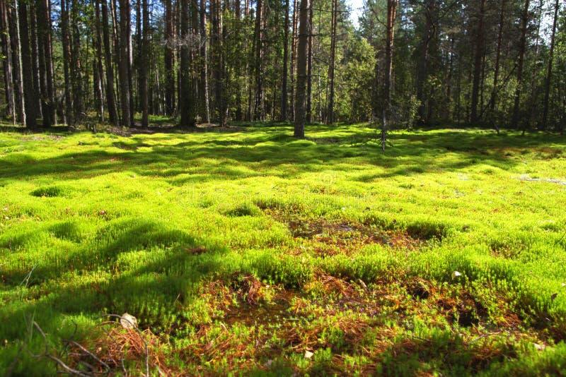 De bosopen plek stak met de zon aan royalty-vrije stock foto