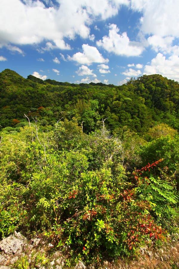 De BosReserve van Guajataca - Puerto Rico stock foto's