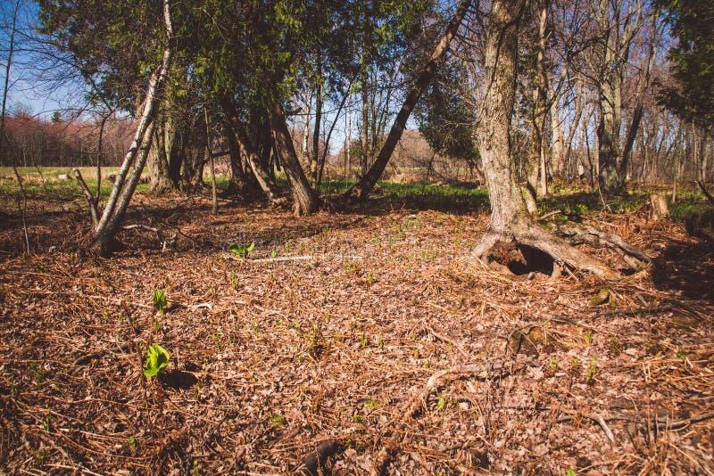 De bosscène van de lentequebec Canada stock afbeelding