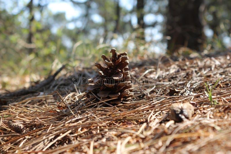De bossen en de aard zijn een schoonheid stock foto's
