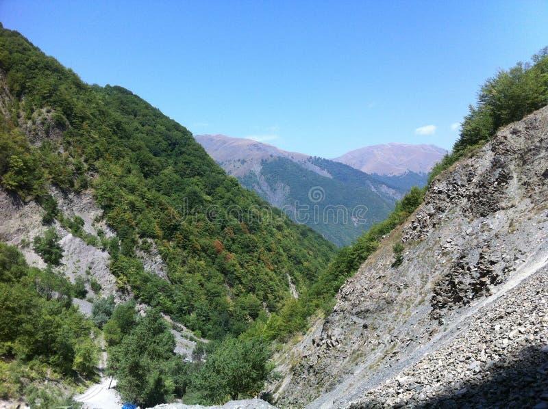 De bossen van de berg stock foto's