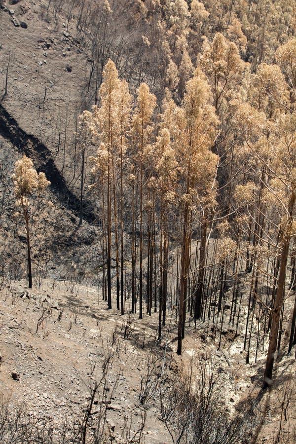 De bossen van de werelderfenis van Madera door branden in 2016 vreselijk worden vernietigd die Wat van bomen hebben enorm zullen  royalty-vrije stock afbeeldingen