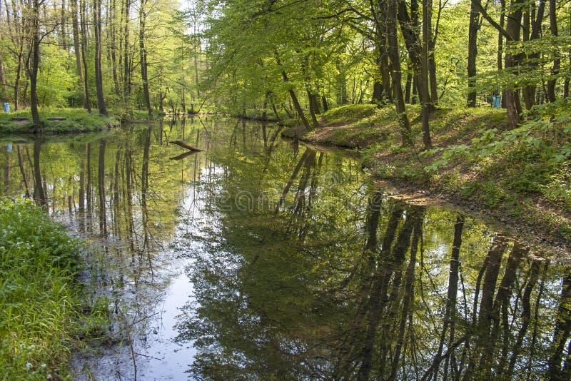 De bossen van het alluviale gebied royalty-vrije stock afbeeldingen