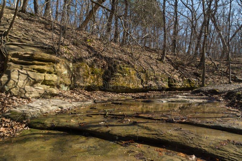 De bossen van Illinois royalty-vrije stock fotografie