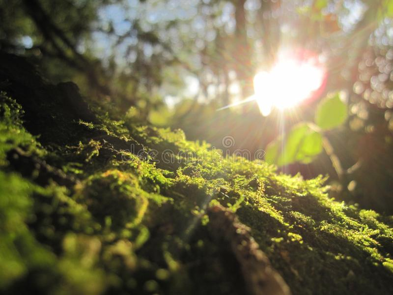 De bosvloer stock foto's