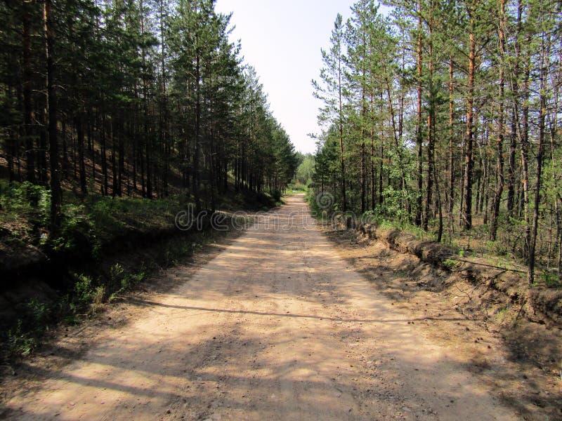De bosweg gaat in de afstand af stock afbeelding