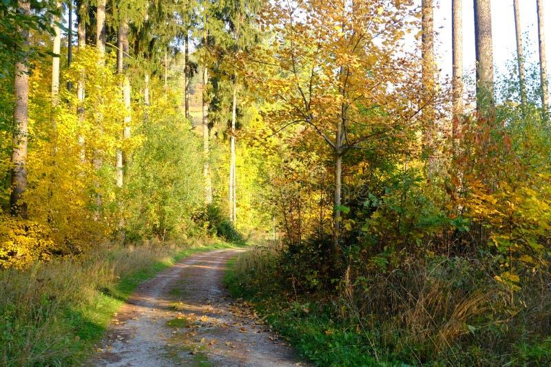 De bosweg van de herfst Foto die in Polen wordt gemaakt royalty-vrije stock afbeelding