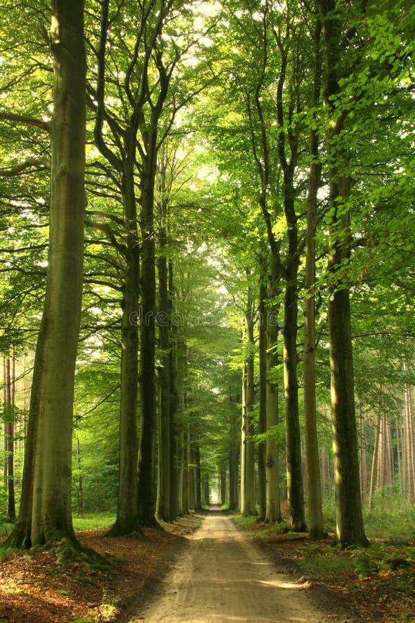 De bosweg van de zomer royalty-vrije stock fotografie