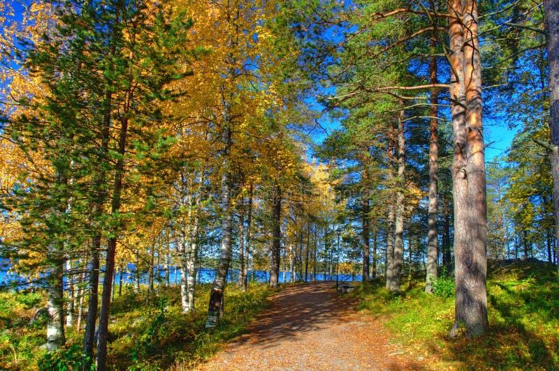 De bosweg van de herfst Foto die in Polen wordt gemaakt stock afbeeldingen