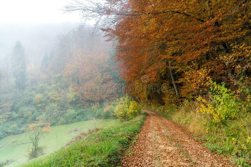 De boswegherfst met mist stock afbeeldingen
