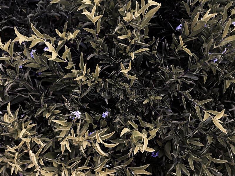 De botanische achtergrond van het installatieverlof royalty-vrije stock foto