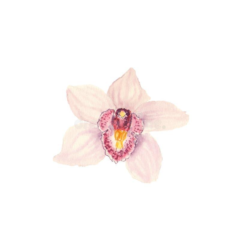 De botanische schets van de waterverfillustratie van roze tropische orchideebloem op witte achtergrond stock foto